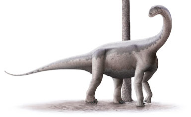 Jobaria Dinosaur, facts | information - Jobaria challengeri