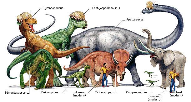 Dinosaurs types, Facts | Museum - Dinosaur news