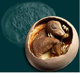 History Of Eggs, Images | Information - dinosaur fossil skeleton