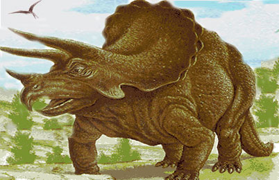 triceratops dinosaur facts triceratops fossil