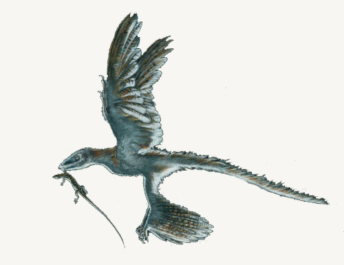 Acrocanthosaurus, photos | fossil - Real dinosaur picture