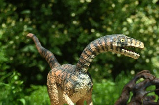 [Image: Compsognathus_2.jpg]