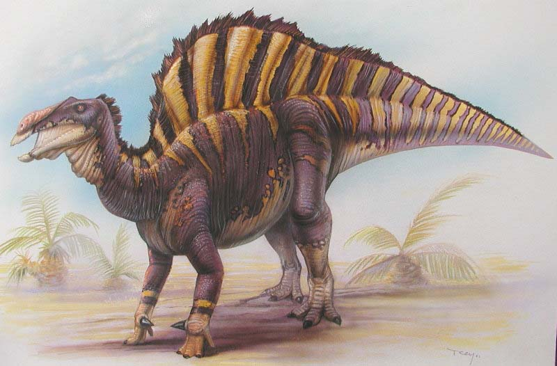 Ouranosaurus Dinosaur, images | information - Ouranosaurus Gallery