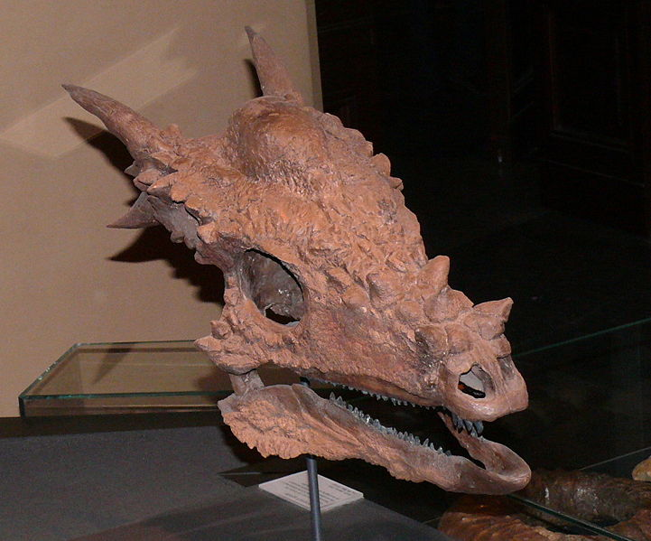 Stygimoloch Dinosaur, photos | information - Stygimoloch ...