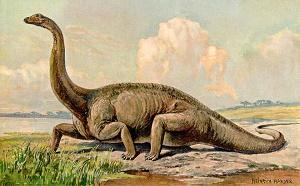 Diplodocus dinosaur arts information diplodocus gallery - Dinosaure diplodocus ...