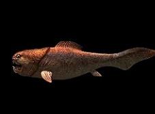 Dunkleosteus Dinosaur Gallery | Online dinosaurs information